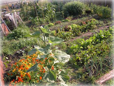 Allotment Picture